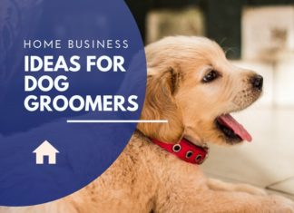 business ideas for dog groomers