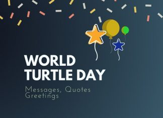 World Turtle Day Messages